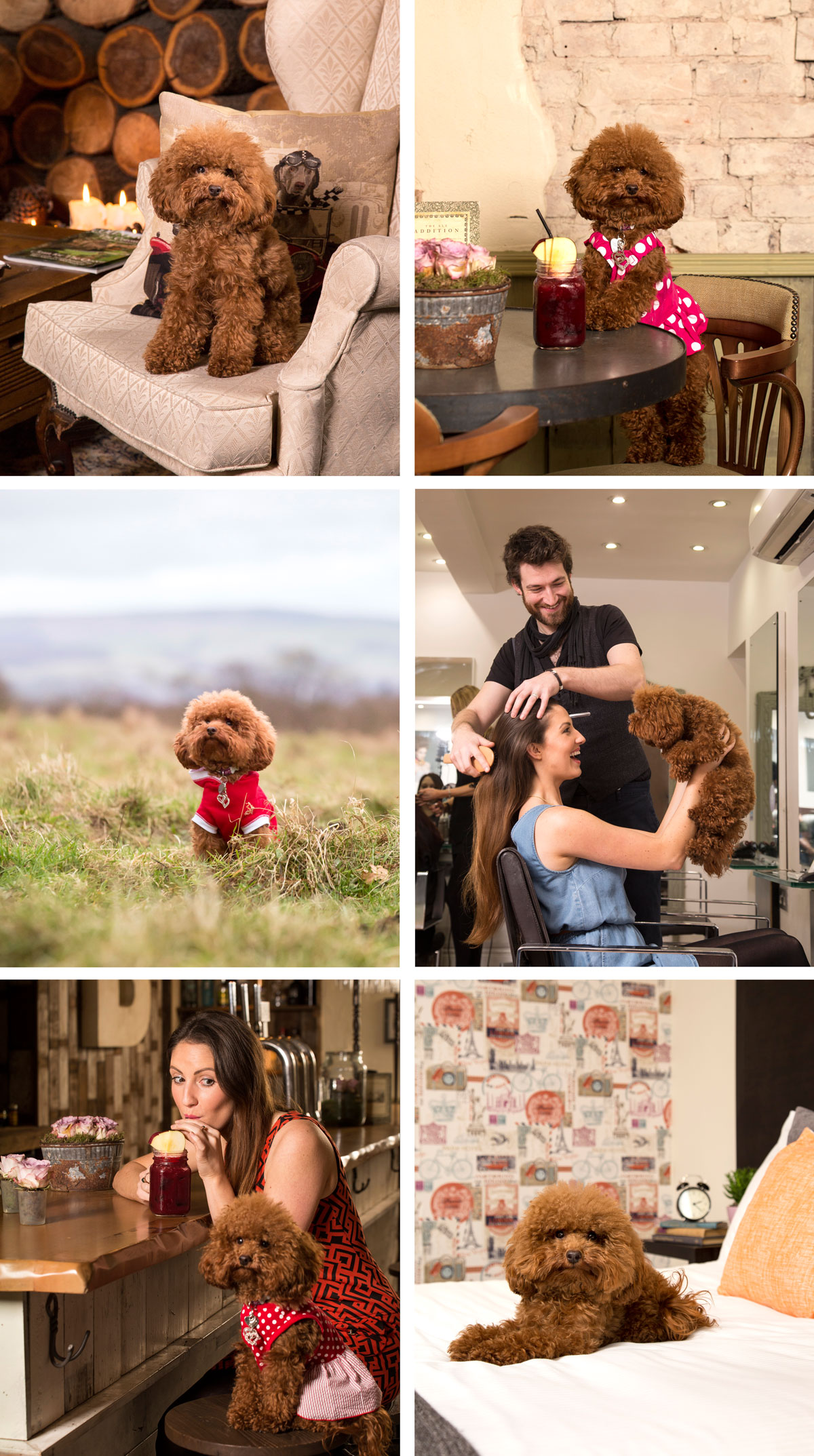 photography-VIP magazine-pets-dogs-cheshire