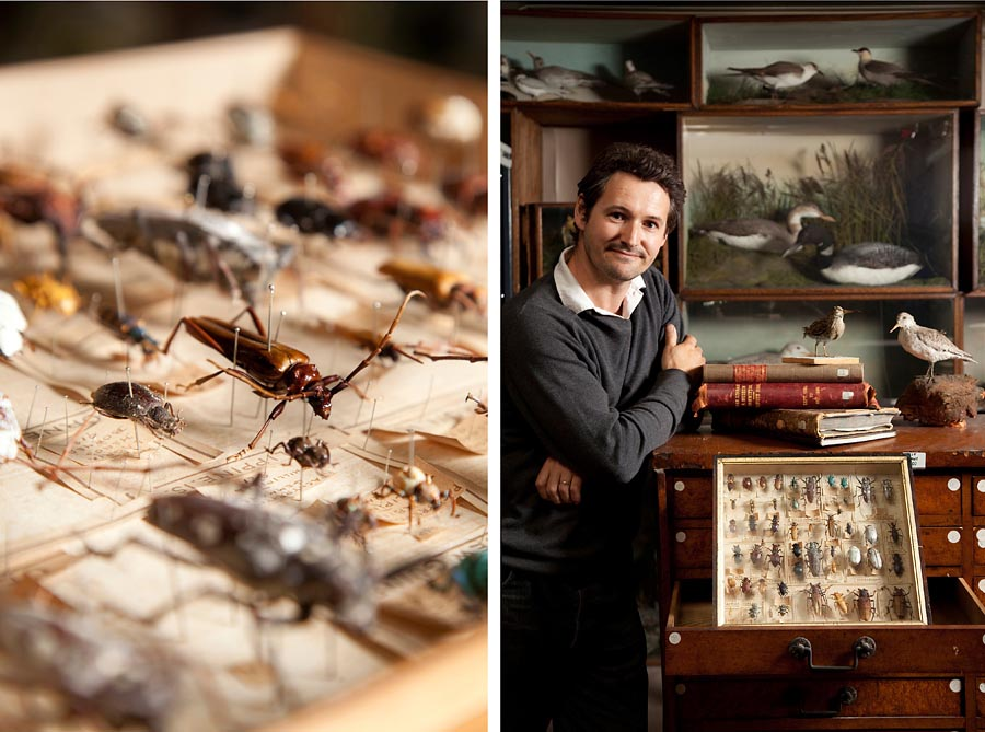 Two images. The one on the left is a still life - close up of insect specimins and the second is a portrait of a man who works in a museum with the insect specimins.